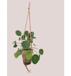 Mumuland - Babylon Planteophæng - Natur