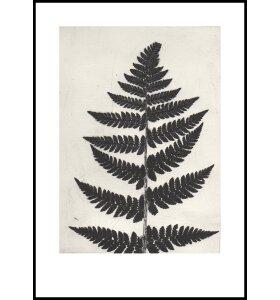 Pernille Folcarelli - Fern Black 50x70