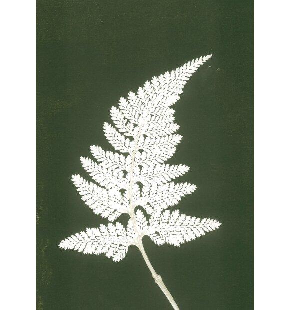 Pernille Folcarelli - A5 Fern white
