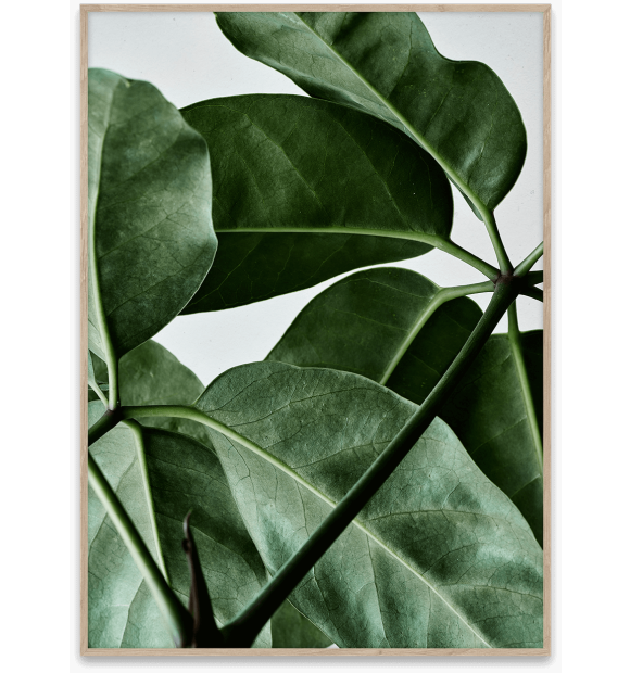 Paper Collective - Green Home 01 50x70