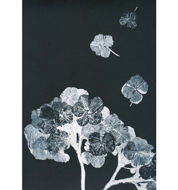 Pernille Folcarelli - A5 Hortensia black