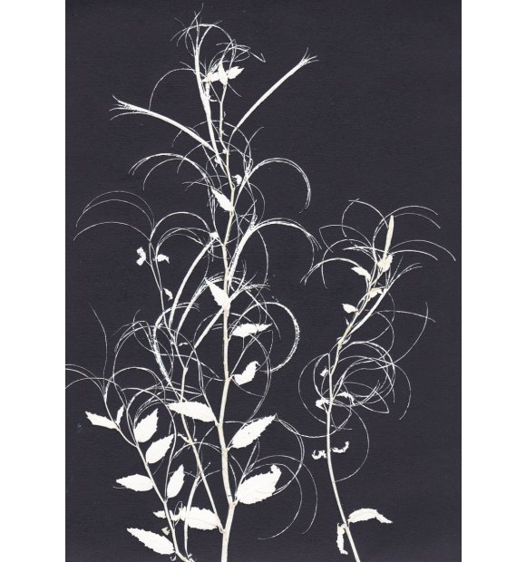 Pernille Folcarelli - A5 Willowherb black