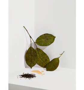 Cocoon Tea Artisans - Darjeeling Oolong Te