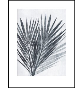 Pernille Folcarelli - Palm Light, 30x40