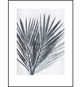 Pernille Folcarelli - Palm Light 70*100