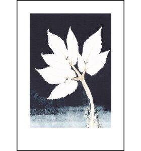 Pernille Folcarelli - Goutweed 1 Ink, 50*70
