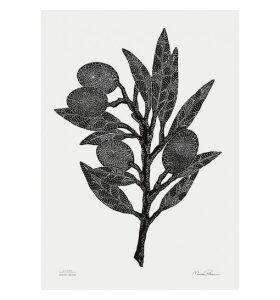 Monika Petersen Art Print - Olivengren, 50x70