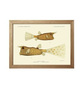The Dybdahl Co. - Fishes #rc155