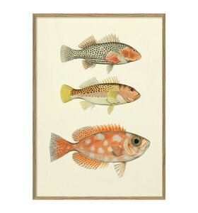 The Dybdahl Co. - Fishes #3901P
