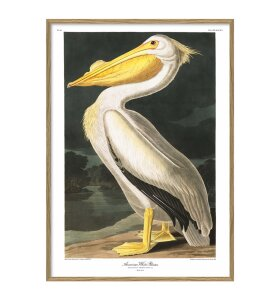 The Dybdahl Co. - American White Pelican #6504, 30x40