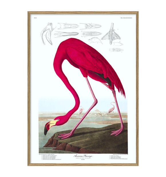 The Dybdahl Co. - American Flamingo #6500, 30x40