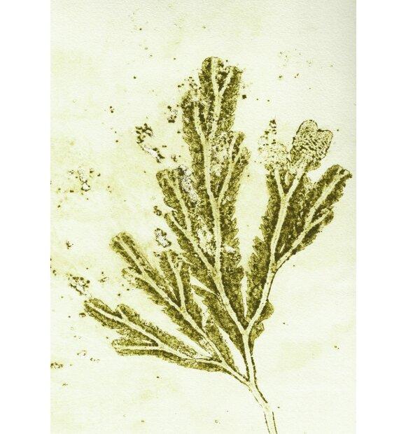 Pernille Folcarelli - A5 Seaweed ochre green