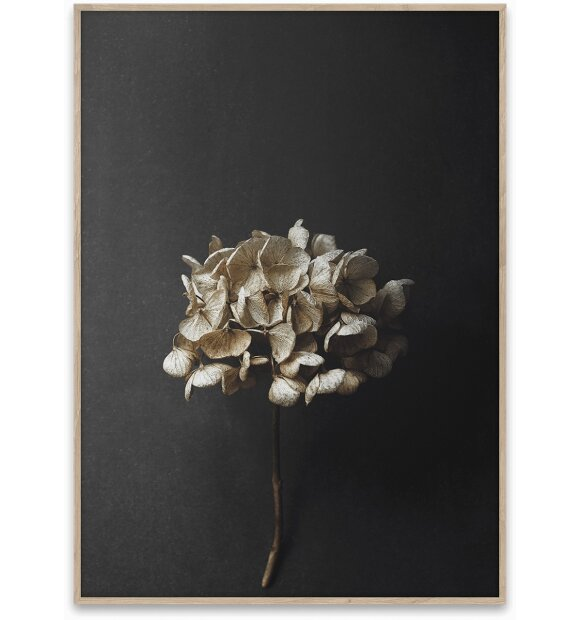 Paper Collective - Still Life 04, 50x70