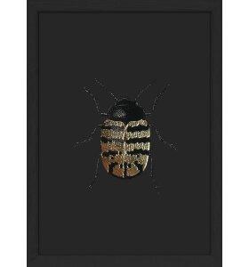 The Dybdahl Co. - #9700 Golden Beetle, Black