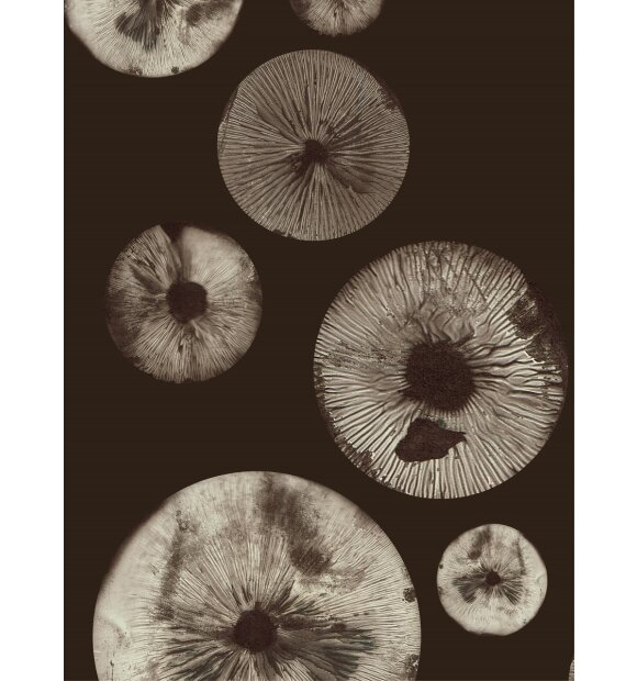 Pernille Folcarelli - Mushroom 5, Chocolate