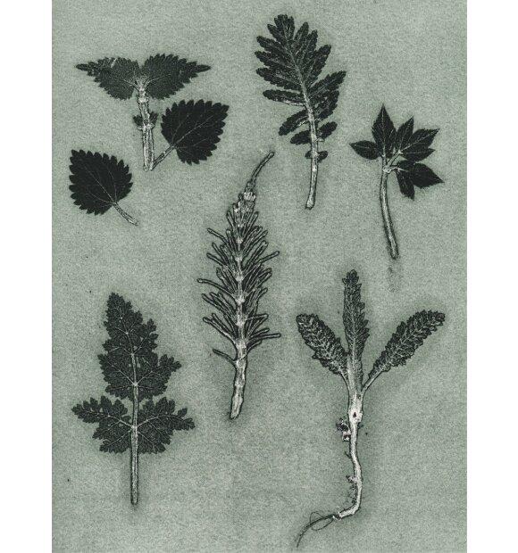 Pernille Folcarelli - 50x70 Wild Herbs