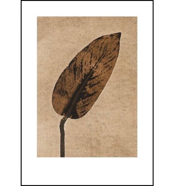 Pernille Folcarelli - Calathea Caramel, 50x70