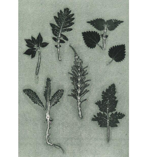 Pernille Folcarelli - Wild Herbs Dark Green, A5