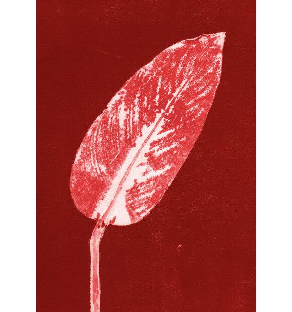 Pernille Folcarelli - Calathea Burned Red, A5