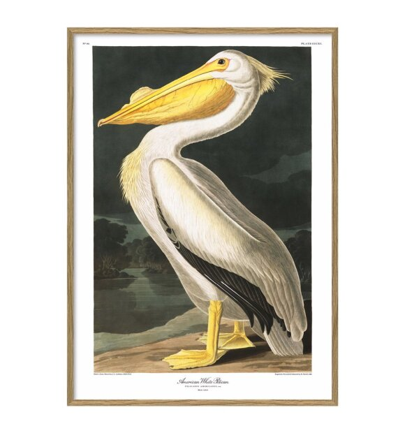The Dybdahl Co. - #6504 American White Pelican