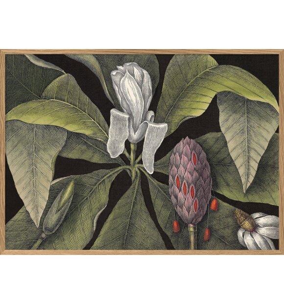 The Dybdahl Co. - White Magnolia Bud #3414, 30x40