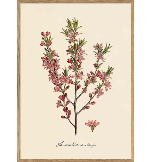 The Dybdahl Co. - Pink Almond Blossoms #3623 30x40