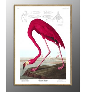 The Dybdahl Co. - American Flamingo.#6500, 112x158