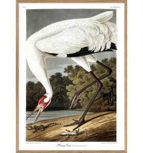 The Dybdahl Co. - Whooping Crane #6524