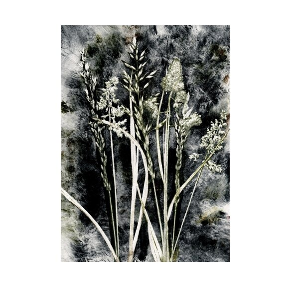 Pernille Folcarelli - Grass Charcoal 50x70