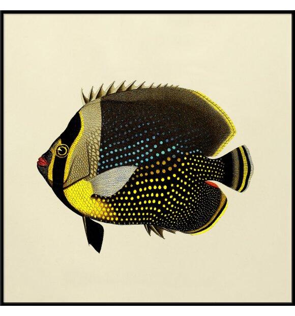 The Dybdahl Co. - Black Fish #5612, 30*30