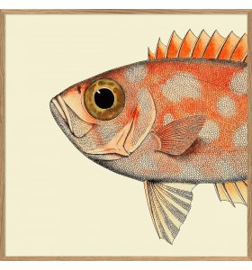 The Dybdahl Co. - Dotted orange fish head 61*61