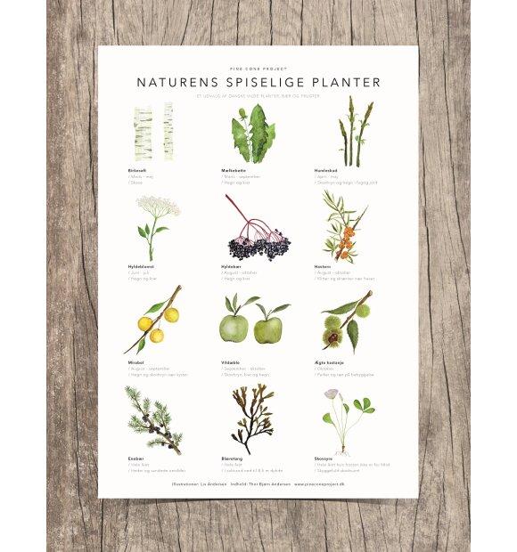 Pine Cone Project - Naturens Spiselige Planter, A3