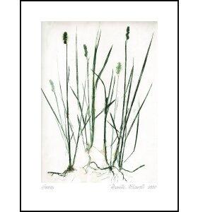 Pernille Folcarelli - Grass Green 70*100