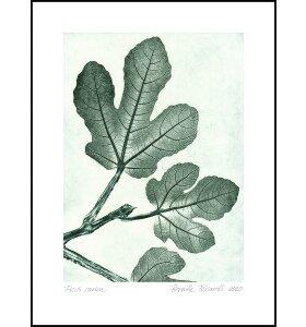 Pernille Folcarelli - Fig 1 Green 50*70