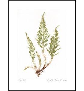 Pernille Folcarelli - Horsetail Crisp Green 30*40