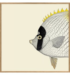 The Dybdahl Co. - Yellow Fish Head #5606, 30x30 - indrammet