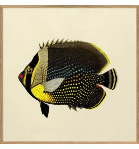 The Dybdahl Co. - Black Fish #5612, 30*30
