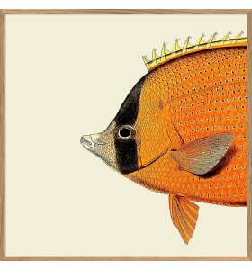 The Dybdahl Co. - Orange Fish Head #5608