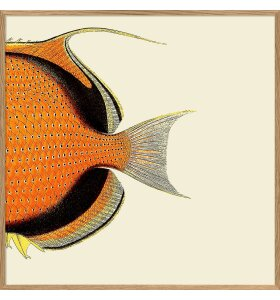 The Dybdahl Co. - Orange Fish Tail #5609