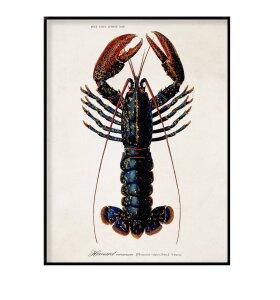 The Dybdahl Co. - Lobster 50*70 indrammet - Sendes ikke