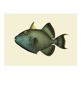 The Dybdahl Co. - Trigger Fish 50*70