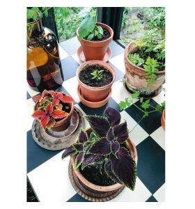 New Mags - Plantelykke, Skab grønne oaser i dit hjem